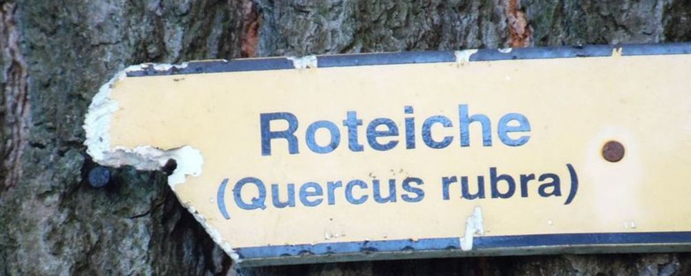 © wikipedia_Lichtblick2012