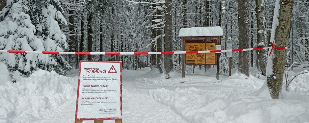 © Lea Praml/Nationalpark Bayerischer Wald