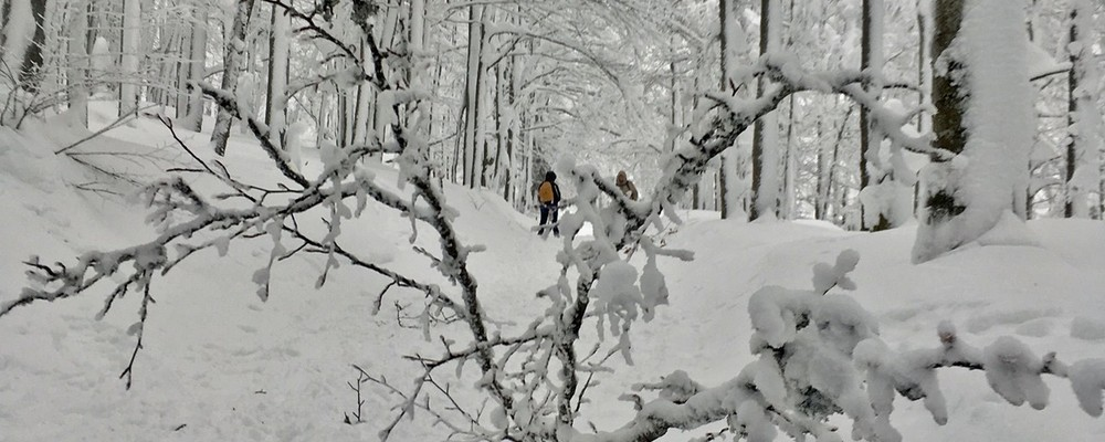 © Foto: Gregor Wolf/Nationalpark Bayerischer Wald