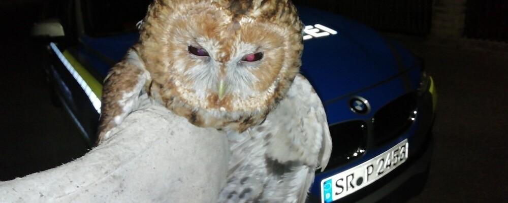 © Polizeiinspektion Landshut