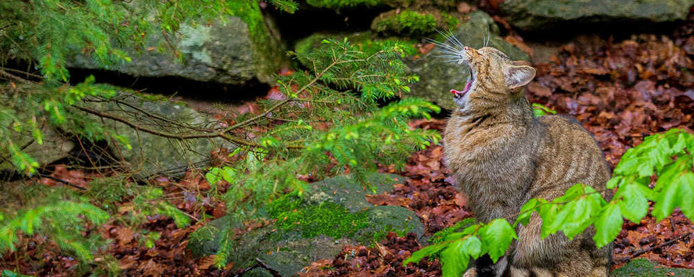 © Christoph Wagner/Nationalpark Bayerischer Wald